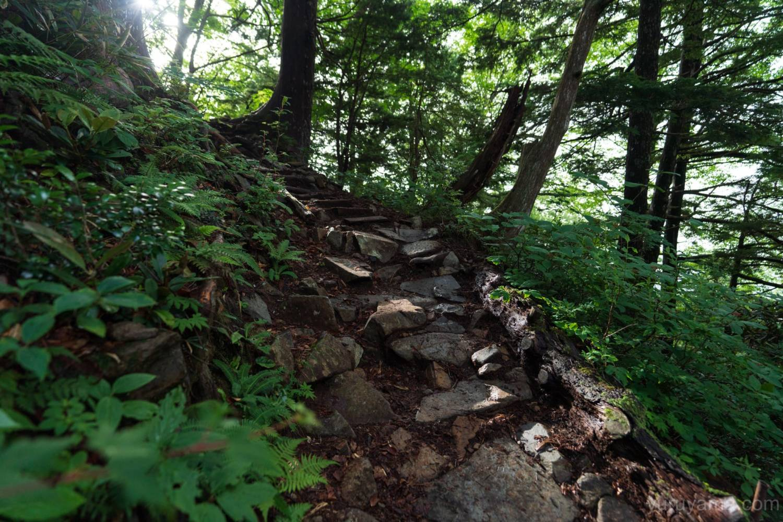 柏原新道の登山道