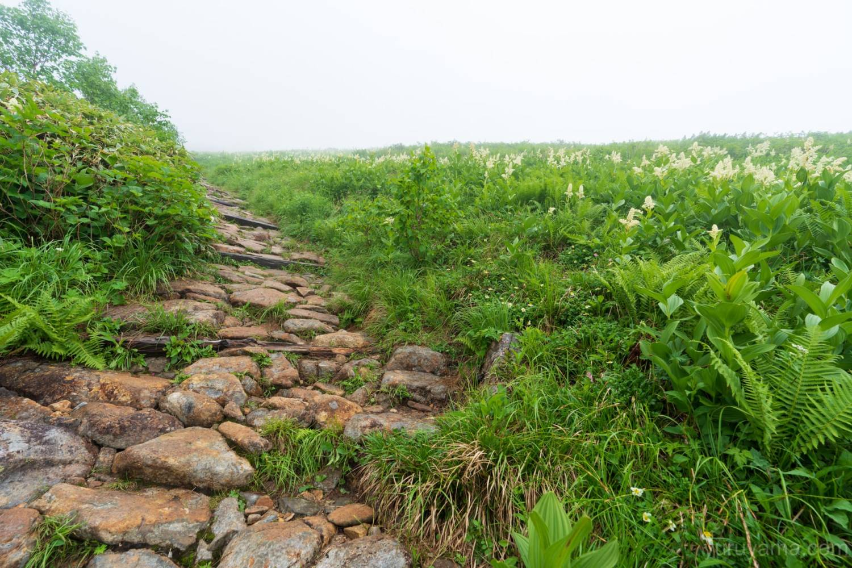 種池山荘へ続く道