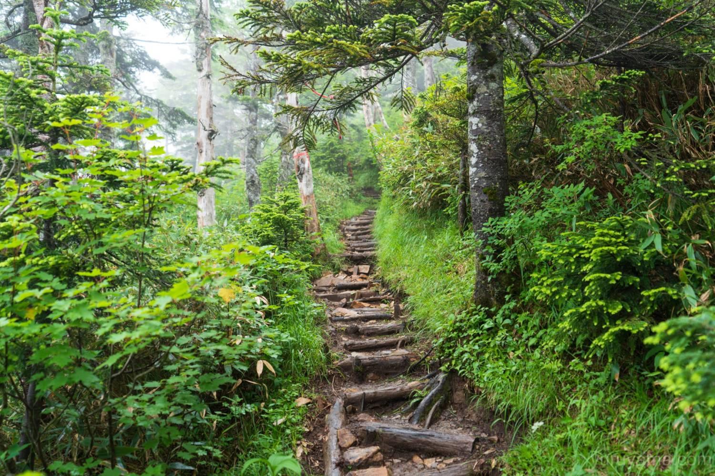 冷池山荘への木道