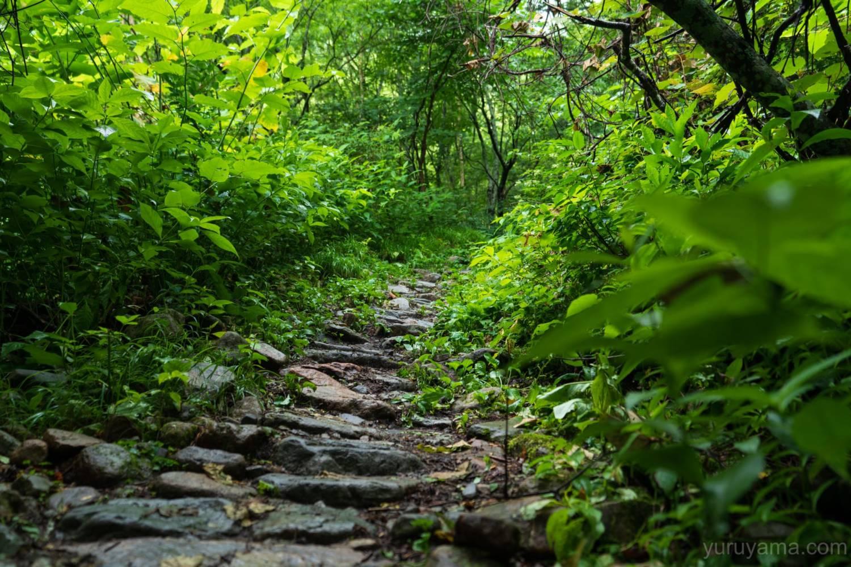 柏原新道の登山道1