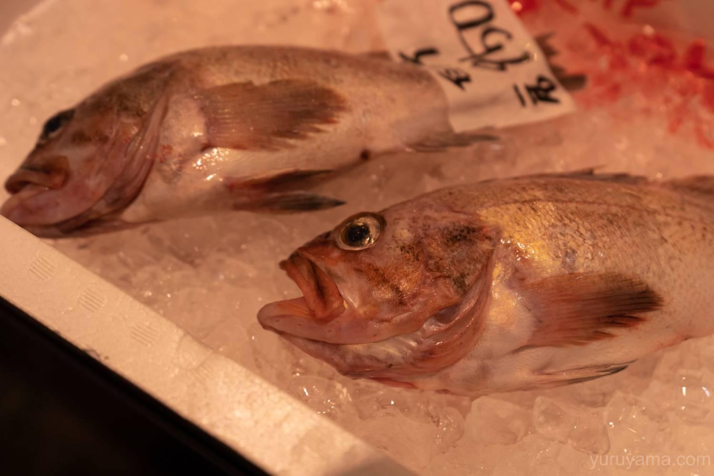 近江町市場の魚