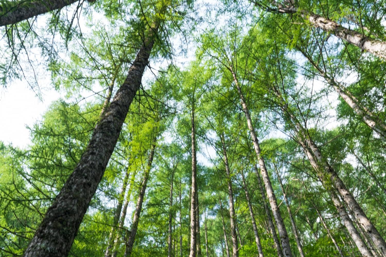 合戦尾根の樹林帯
