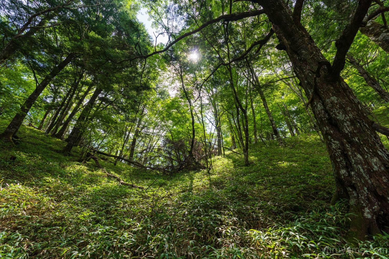 黒戸尾根の樹林帯