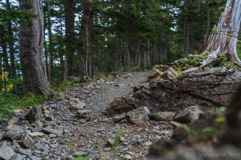 北沢峠へと続く登山道