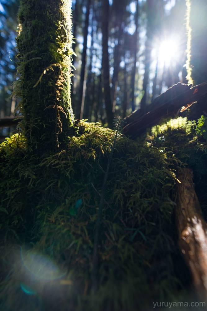 陽に映える苔