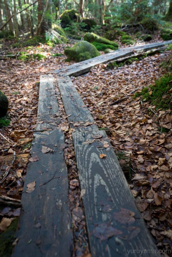 白駒池周遊コースの木道の画像