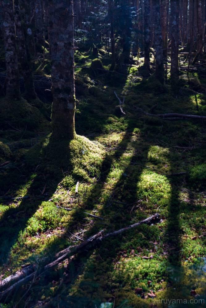 南沢ルートの登山道横の苔