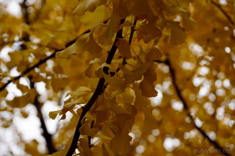 大阪城公園の紅葉3