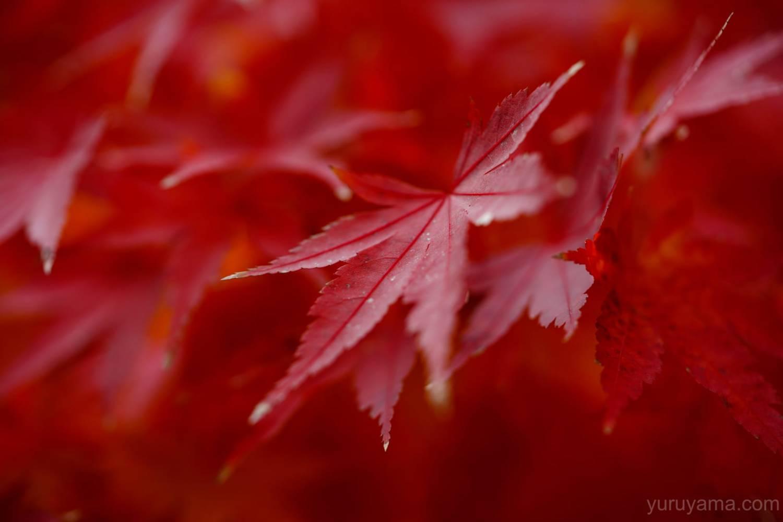 大阪城公園の紅葉5