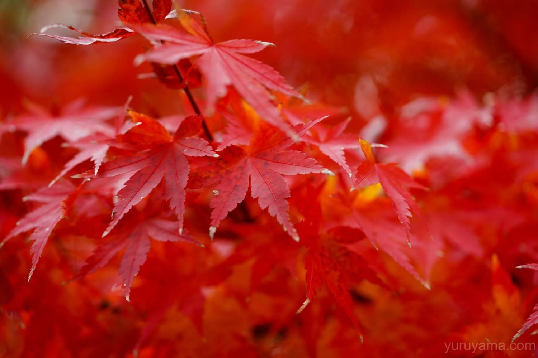 大阪城公園の紅葉10