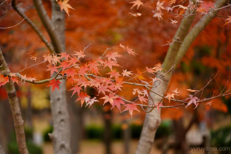 大阪城公園の紅葉7