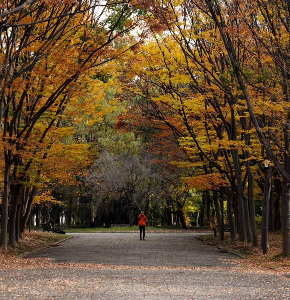 大阪城公園の紅葉15