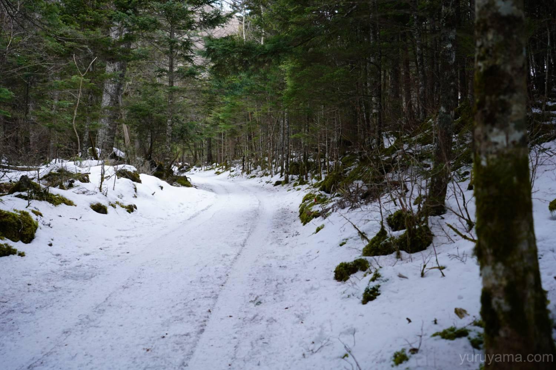 北沢の登山道の画像