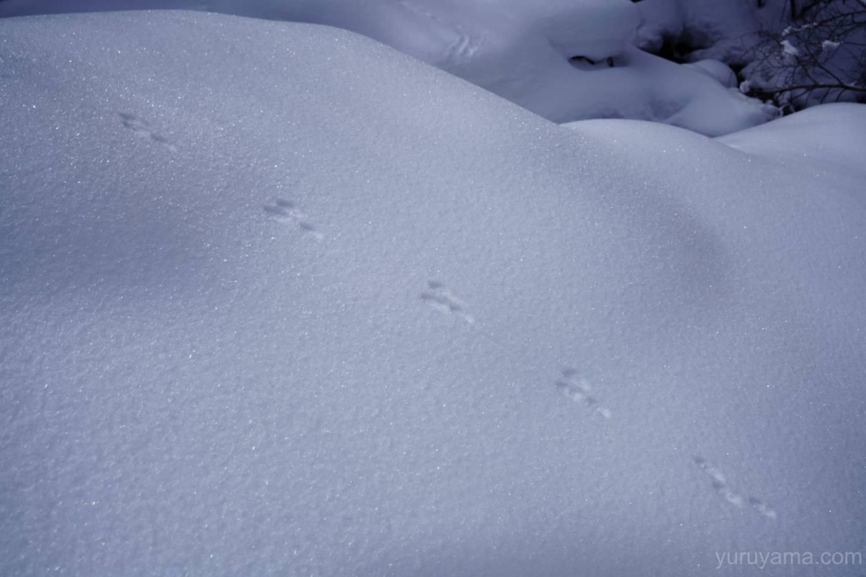 赤岳鉱泉までの登山道の足跡