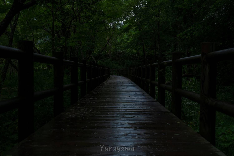 雨に濡れる上高地へ続く木道