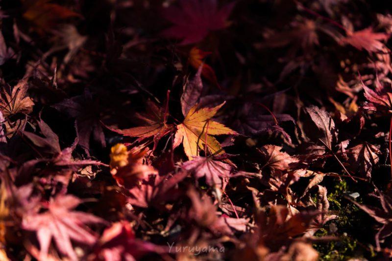 紅葉のピークを過ぎた嵐山