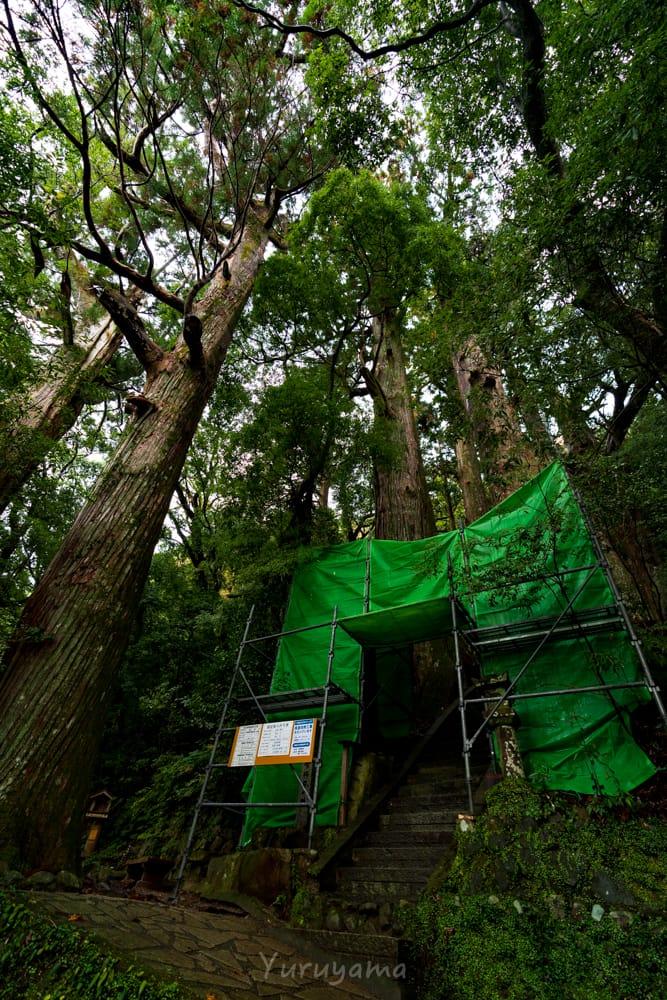 野中の一本杉