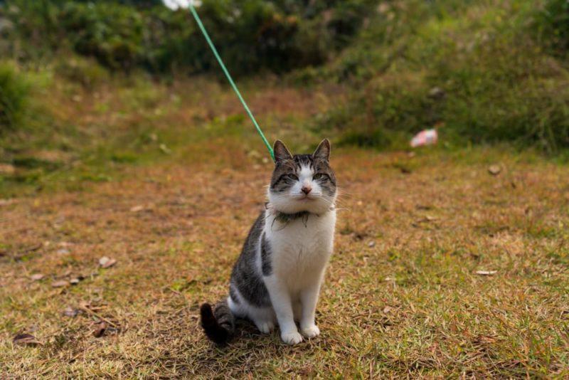 中辺路のアイコン的存在の猫