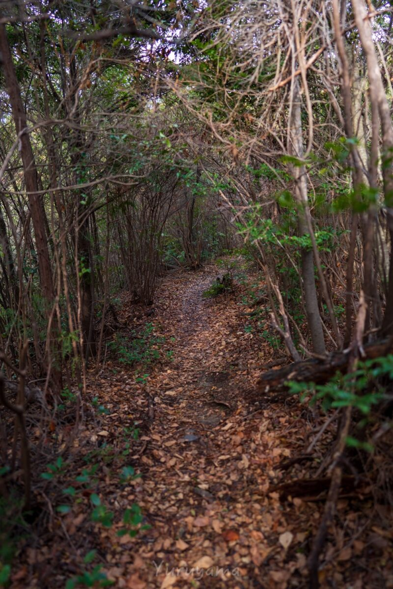 大文字山への登山道