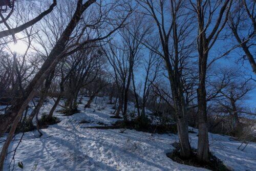 ブナの原生林が続く登山道