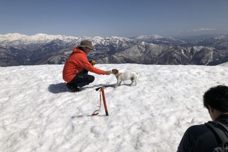 荒島岳山頂の犬