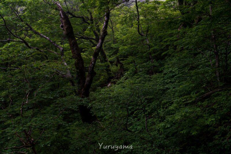 東之川登山道の植生