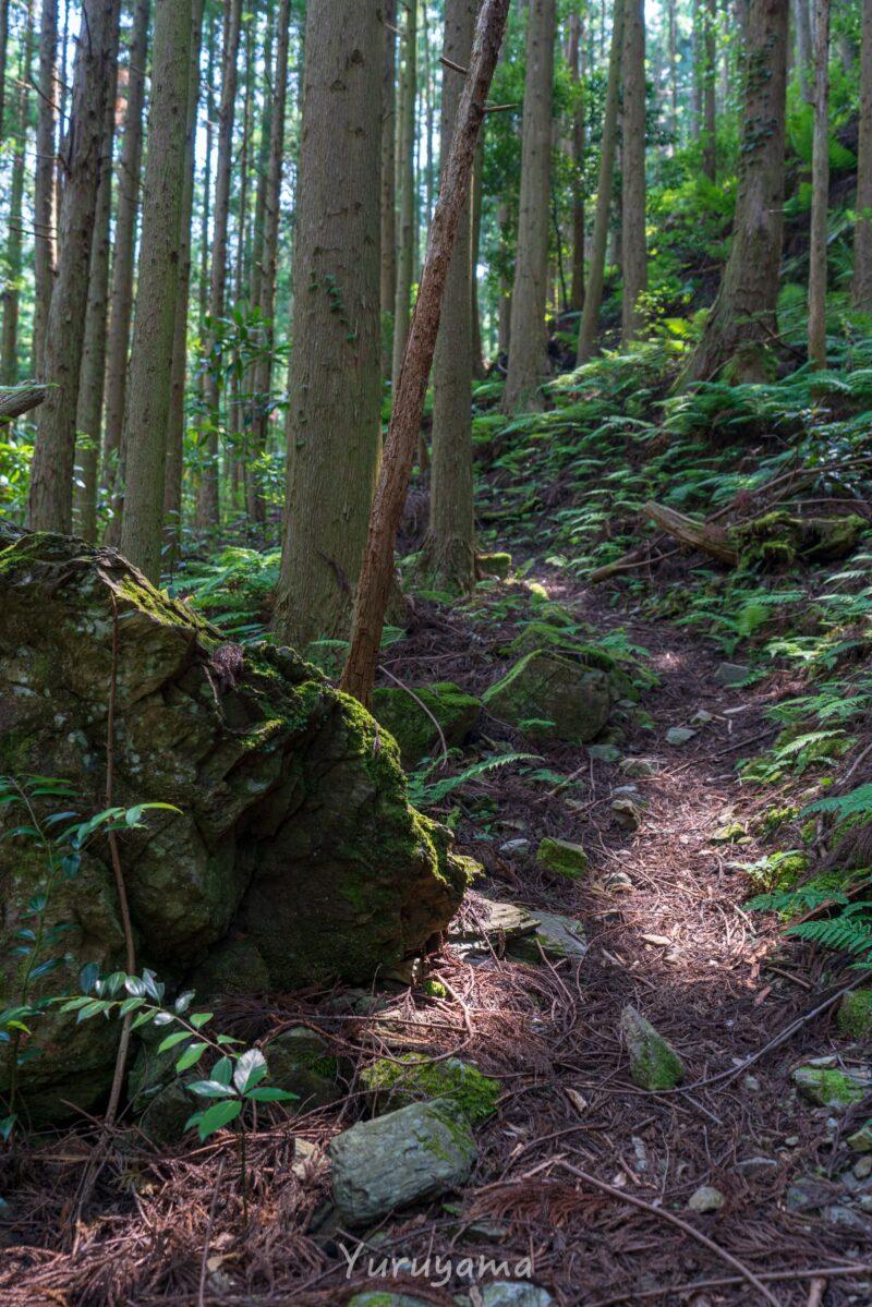 東之川登山道の画像