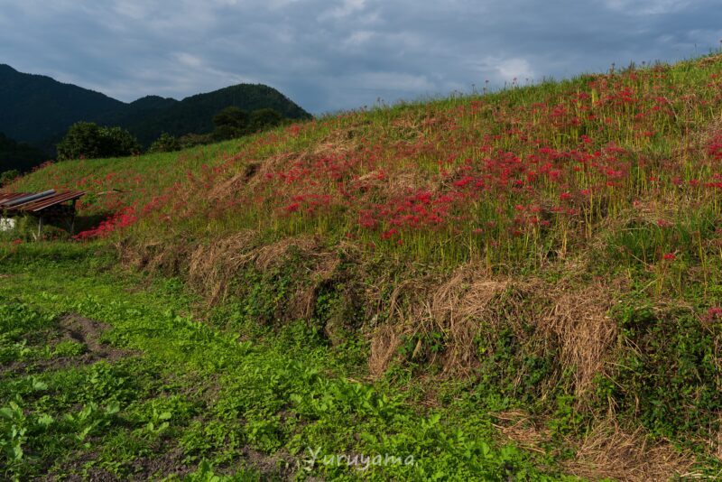 京都大原の風景3